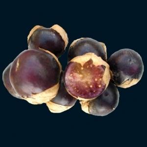 Tomatillo_purple_thumb_300x300