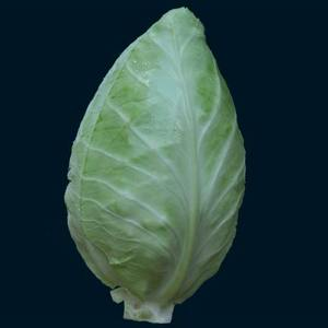 Cabbage_couer_thumb_300x300
