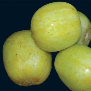 Cucumber_lemon_thumb_300x300