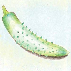 Cucumber_parisian_thumb_300x300