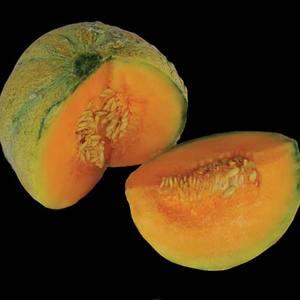 Melon_petite_gris_thumb_300x300