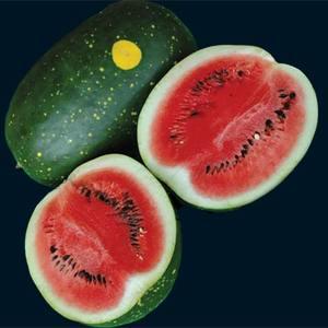 Watermelon_moon_and_stars_thumb_300x300