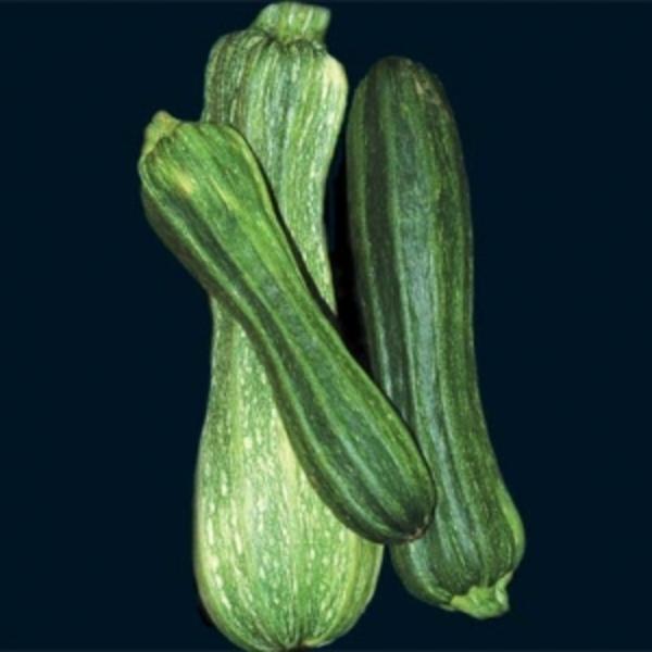 zucchini, Costata Romanesco