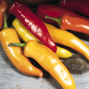 Pepper_hungarian_thumb_300x300