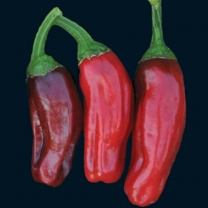Pepper_italian_pepperocini_thumb_300x300