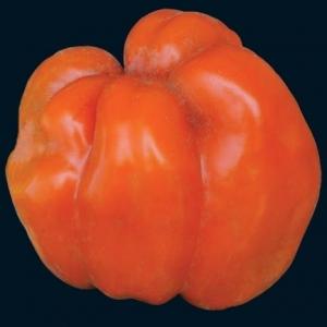 Pepper_orange_bell_thumb_300x300