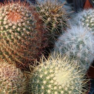 Cactus_full_2_thumb_300x300