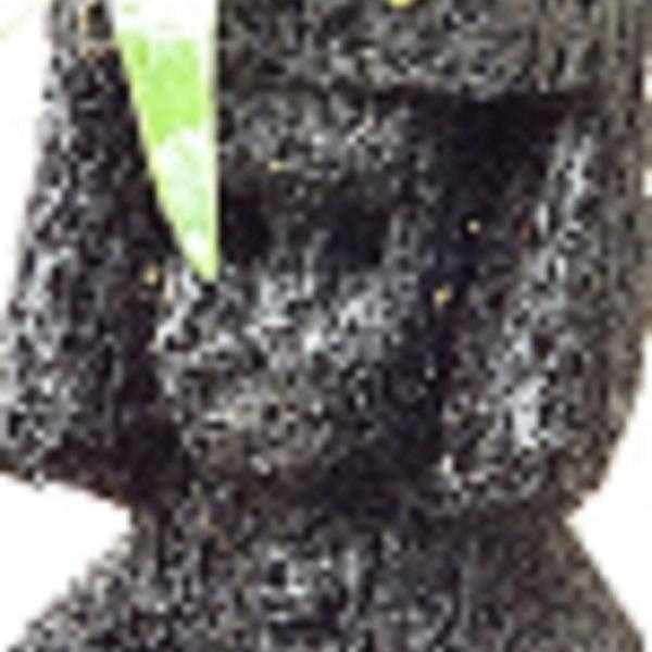 Staghorn Fern (Mounted Atop A Tree-Fern Totum)