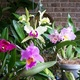 Orchids_12-12-2011_006_thumb_80x80